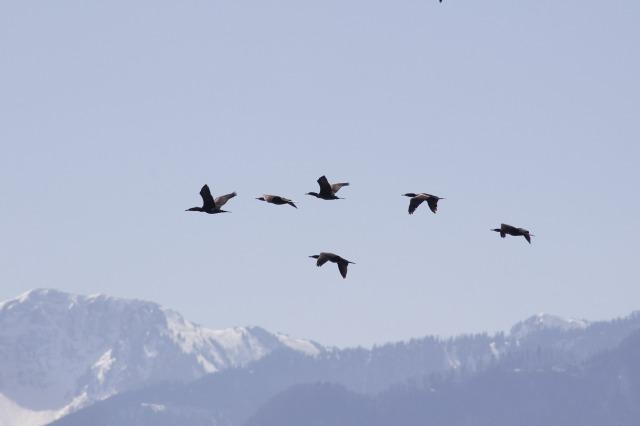 birds-732869_1920